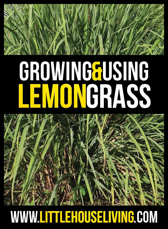 Learn all about growing and using lemongrass for loose teas.