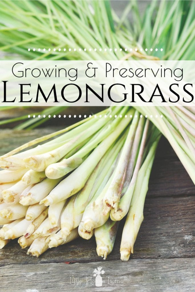 All about growing and using lemongrass. Learn how to take care of your own lemongrass plants and grow and make your own tea! #lemongrass #usinglemongrass #growinglemongrass #lemongrasstea #dryinglemongrass