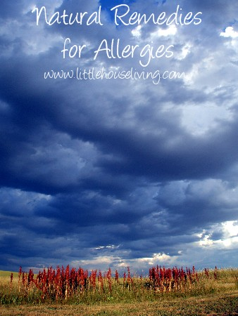 Post image for Natural Allergy Remedies