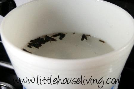 Creating A Homemade Moth Trap Diy Moth Trap Little
