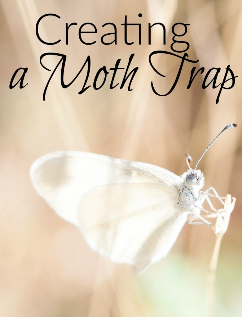 Creating a Moth Trap