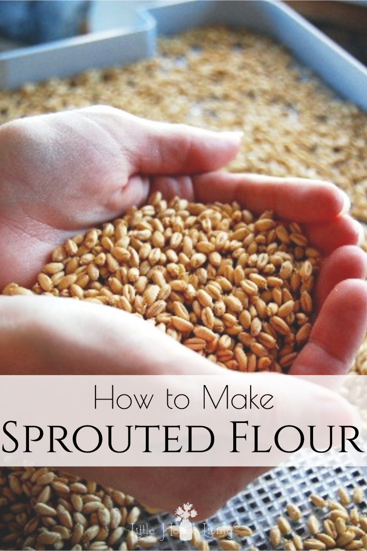 I'm always trying to work on new ways to make healthier food for our family. I've you have been wondering how you can start sprouting wheat berries and using them to make your own flour, this is the post for you! #sproutedgrains #sproutedflour #diysproutedflour #wheatflour #healthy