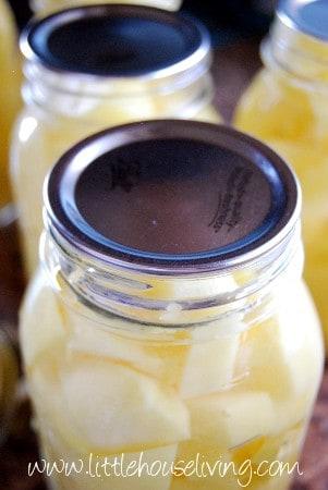 Lids on Canned Potato Jars
