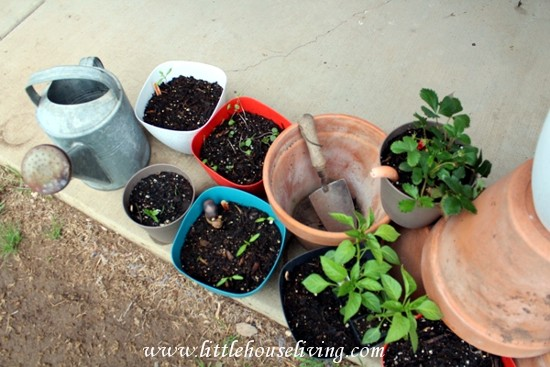 Little House Living - Growing Vegetables in Pots
