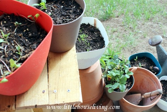 Little House Living _ Growing Vegetables in Pots