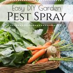 Bug Spray for Gardens - You worked hard to grow that garden this year, make sure your plants are protected with this incredibly simple homemade bug spray for plants!