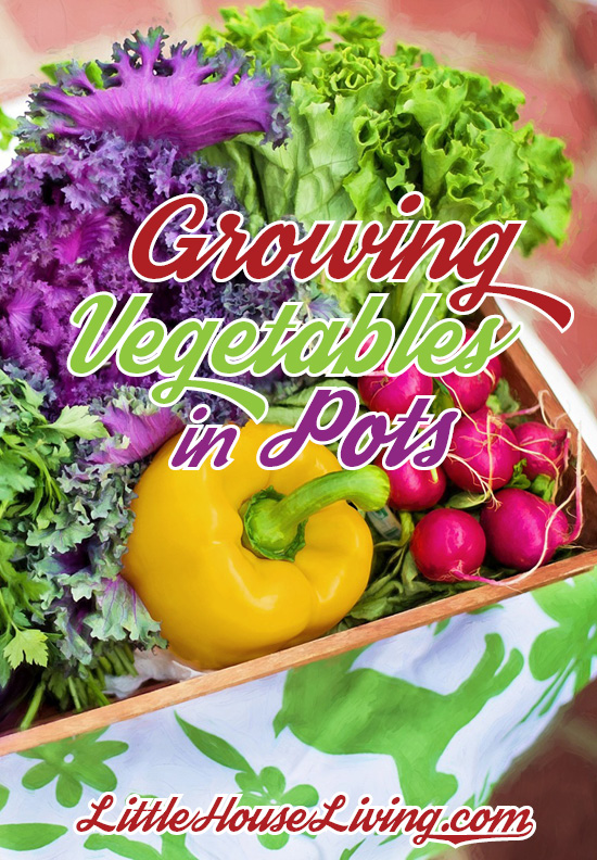 Don't have a lot of space to make a garden? Trying growing vegetables in pots!