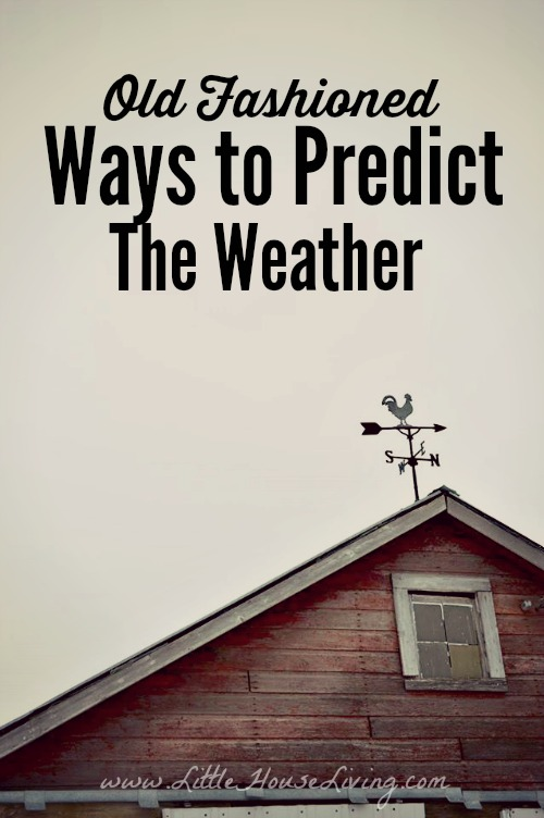 How To Predict The Weather Old Fashioned Weather Predictions