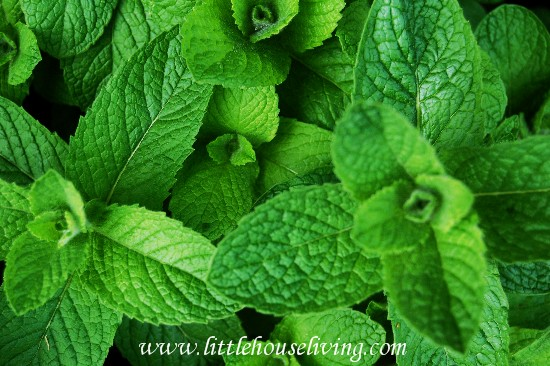 uses for mint
