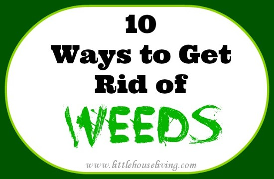 Homemade Weed Killer (10 Different Ideas!)