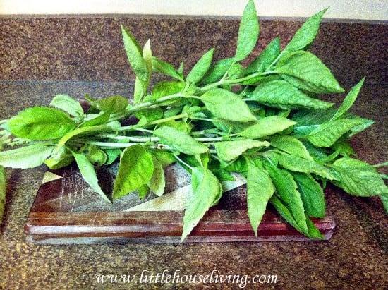 Homemade Pesto Recipe - Little House Living