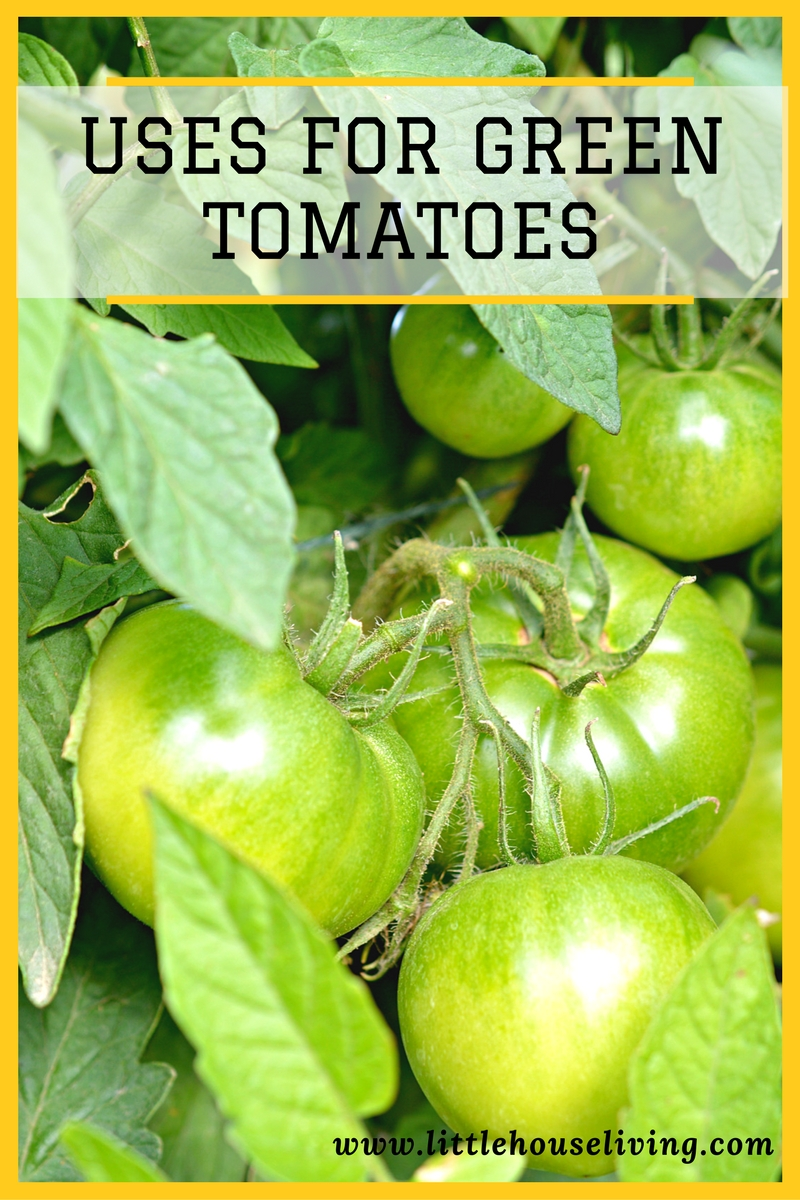 Uses for Green Tomatoes - Find the perfect way to use up the extra green tomatoes from your garden!