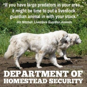 homesteadsecurity