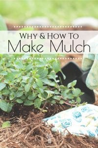 weeds can take over pretty quickly and many vegetable and fruit plants can't regulate moisture properly. There are different types of mulch and you can even learn how to make mulch from everyday household items. #makemulch #mulch #gardenmulch