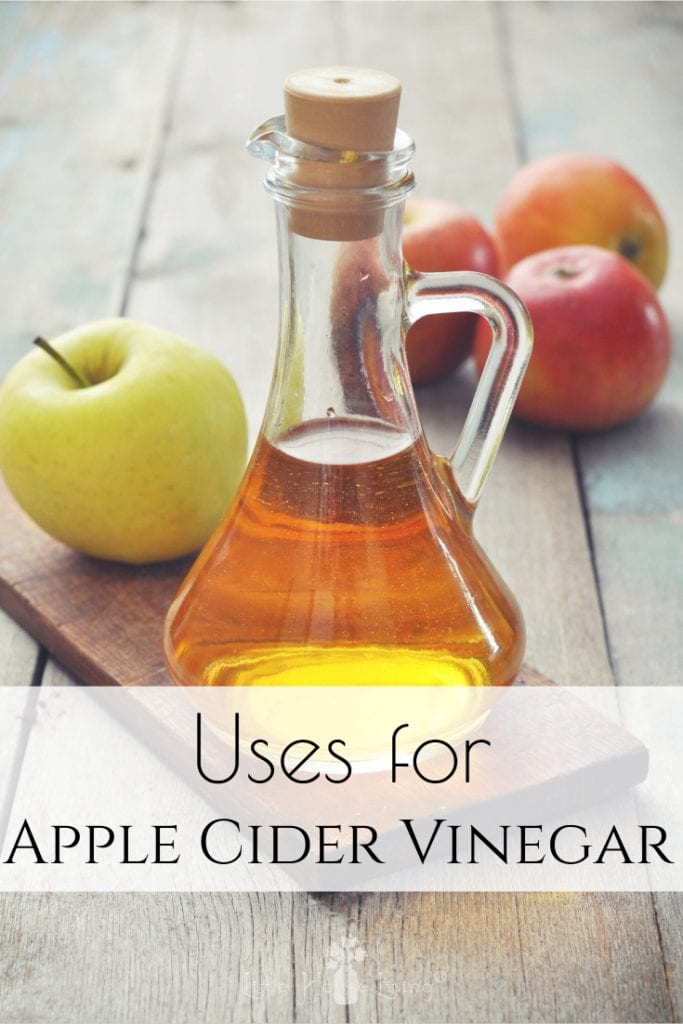 You probably have Apple Cider Vinegar in your home, but do you know all of the many ways it can be used? Here are some new uses for Apple Cider Vinegar so that you can make the most out of this common household ingredient. #applecidervinegar #usesforapplecidervinegar #acv #usesforacv #usesfor #frugal