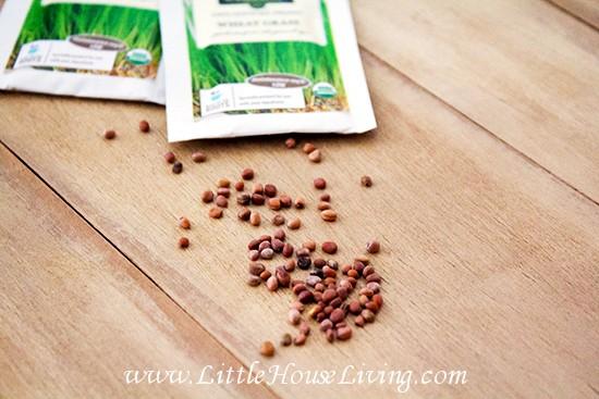 Buying Seeds Online