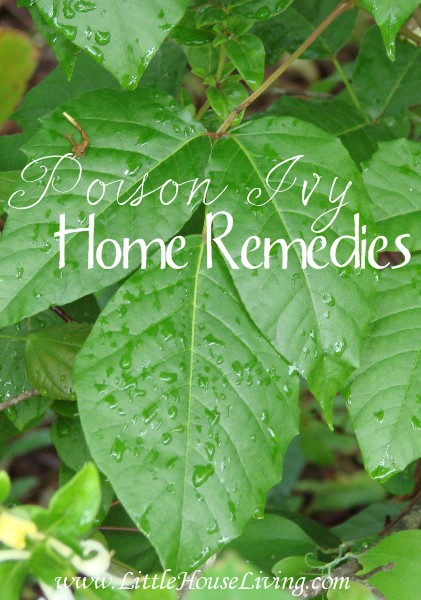 Poison Ivy Home Remedies