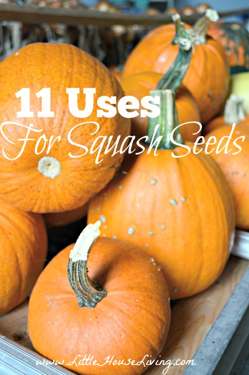 Uses for Squash Seeds