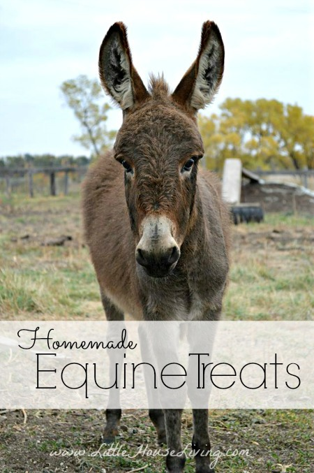Meet Charlie and How to Make Equine Treats