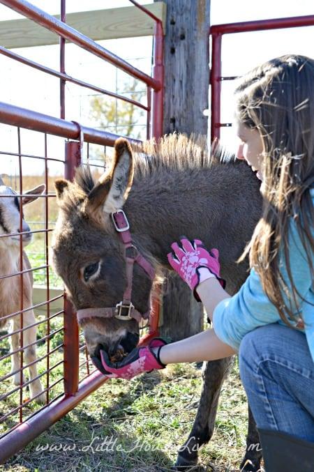How to Make Horse Treats