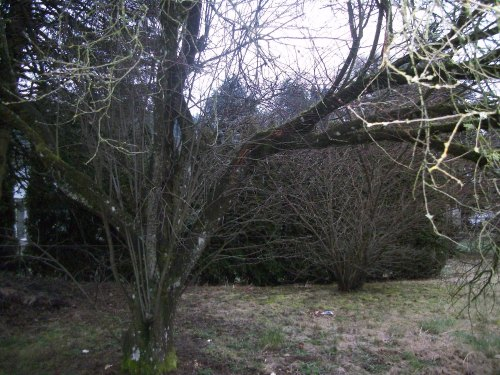 backyard-broken-tree