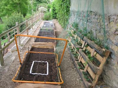 garden-and-chicken-wire2