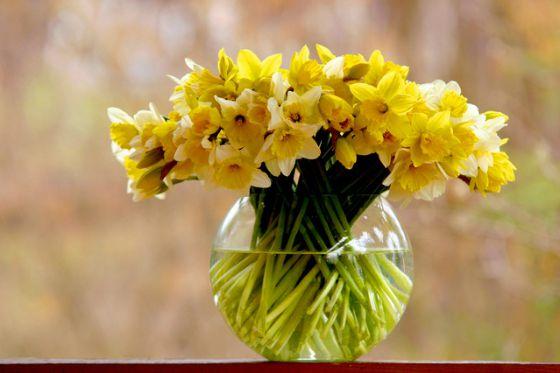 flowers-1399591-639x425