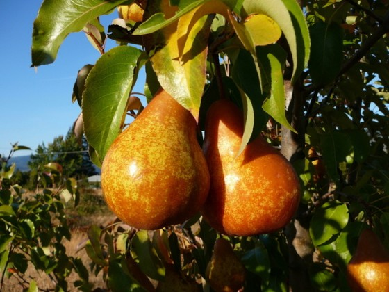 Avoid Newbie Fruit Gardener Mistakes