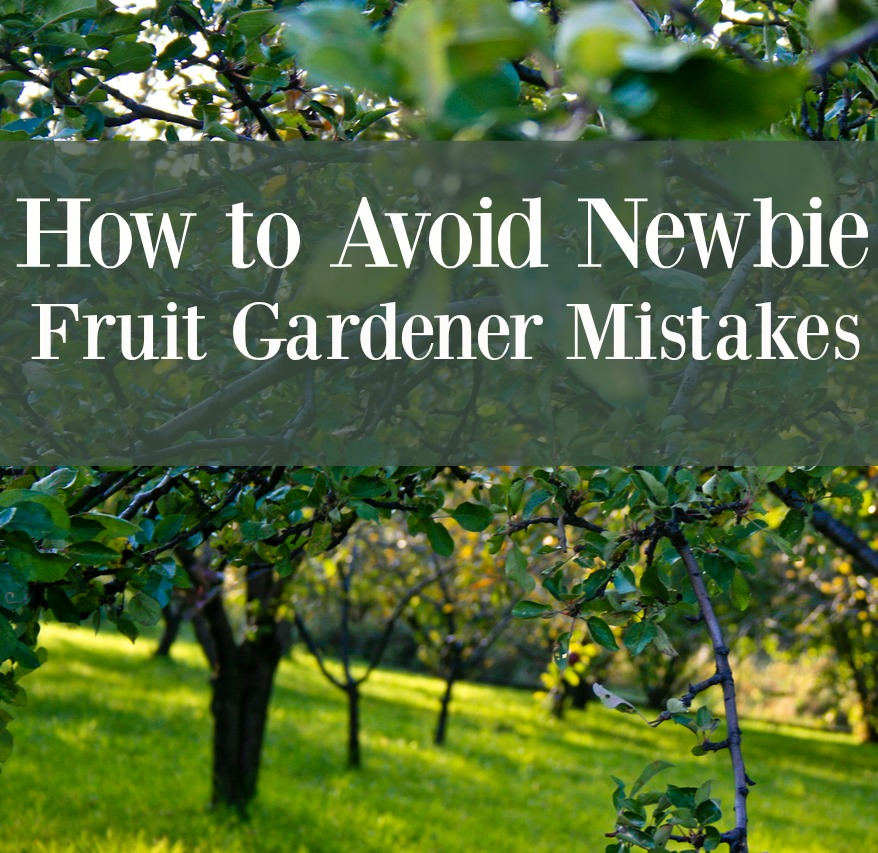 How to Avoid Newbie Fruit Gardener Mistakes and Save Money