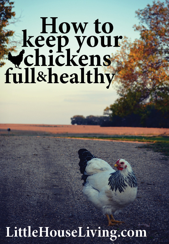 How to keep your chickens full and healthy by supplementing their diet.