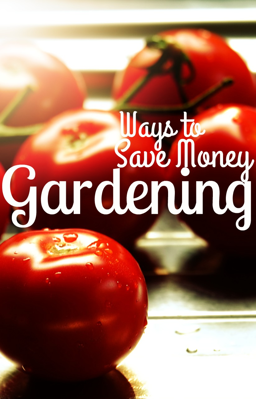 5 Incredibly detailed ways to save money gardening. If you garden or want to, you need these tips!