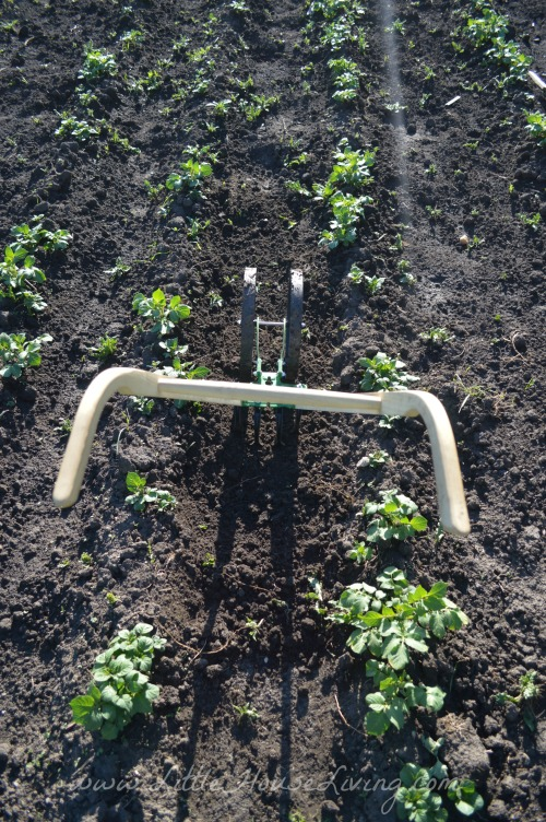Hoss Cultivator