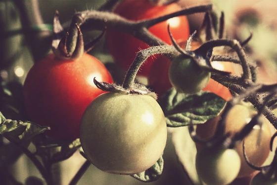 5 Ways to Save Money Gardening