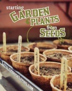 Garden Plants Garden Starts