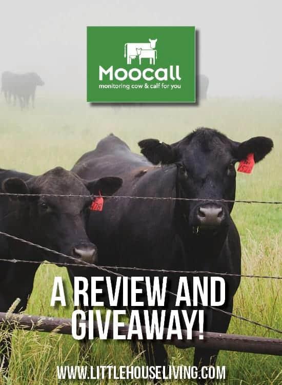 Moocall Calving Sensor: A Review & a Giveaway!