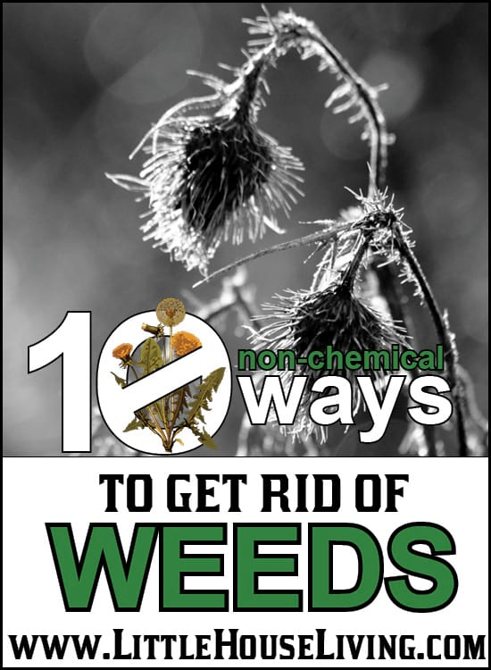 10 Ways to Get Rid of Weeds in your garden and around your home.