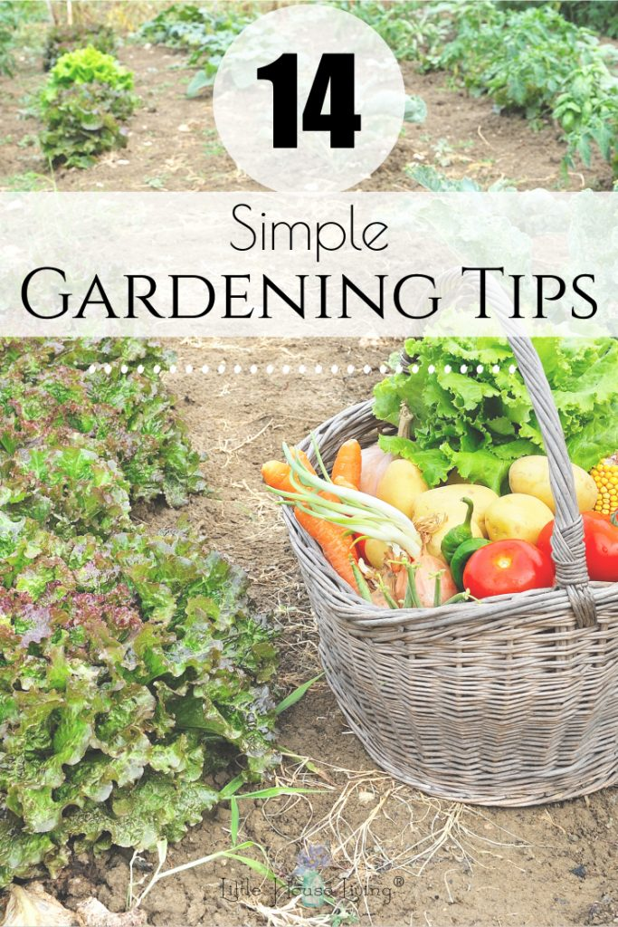 If you are planting a garden of any size this summer you need to follow these 14 simple garden tips to keep your plants healthy and growing! #simplegarden #garden #gardening #gardeningtips