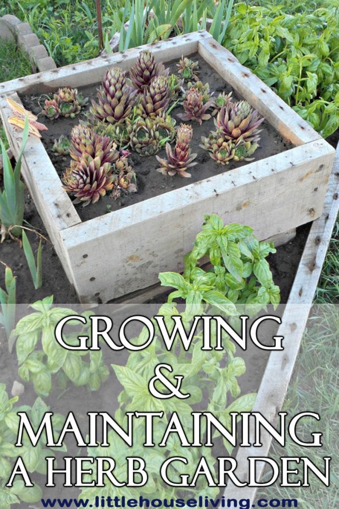 Growing an Herb Garden