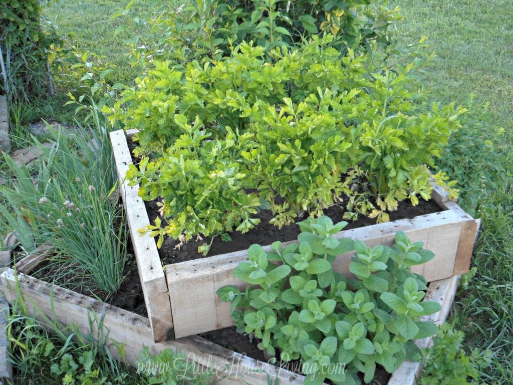 how to grow an herb garden little house living