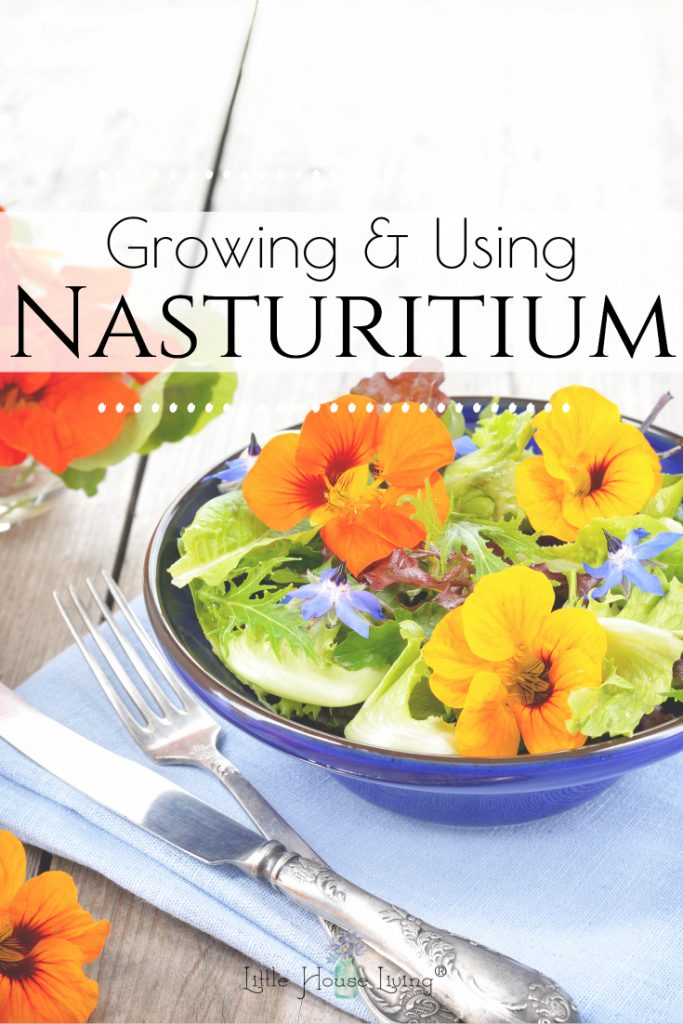 The Nasturtium Plant is more than just a pretty plant and flower that you can grow in your garden. Learn all the wonderful uses of this beautiful plant! #garden #gardening #edible #nasturtiumplant #nasturtiumflowers