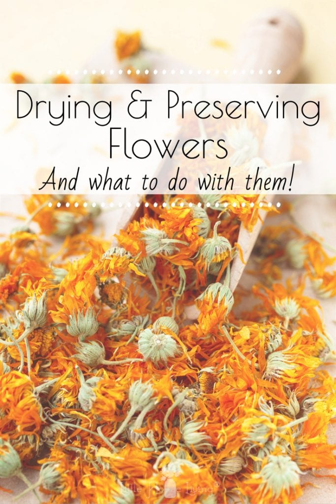 My little ones love to pick flowers for me, but some varieties can die so quickly. Drying and preserving flowers is a great way to save those memories, or to use the flowers in a different way. There are many tips and techniques on how to dry and preserve flowers, and today I'm sharing a few simple ideas with you. #dryingflowers #preservingflowers #driedflowers
