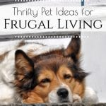 Do you have pets? Here are some thrifty pet ideas that can help you maintain a frugal lifestyle while raising and caring for your family pets. #frugalliving #pets #homemadepetfood #frugalpetideas #frugalideas