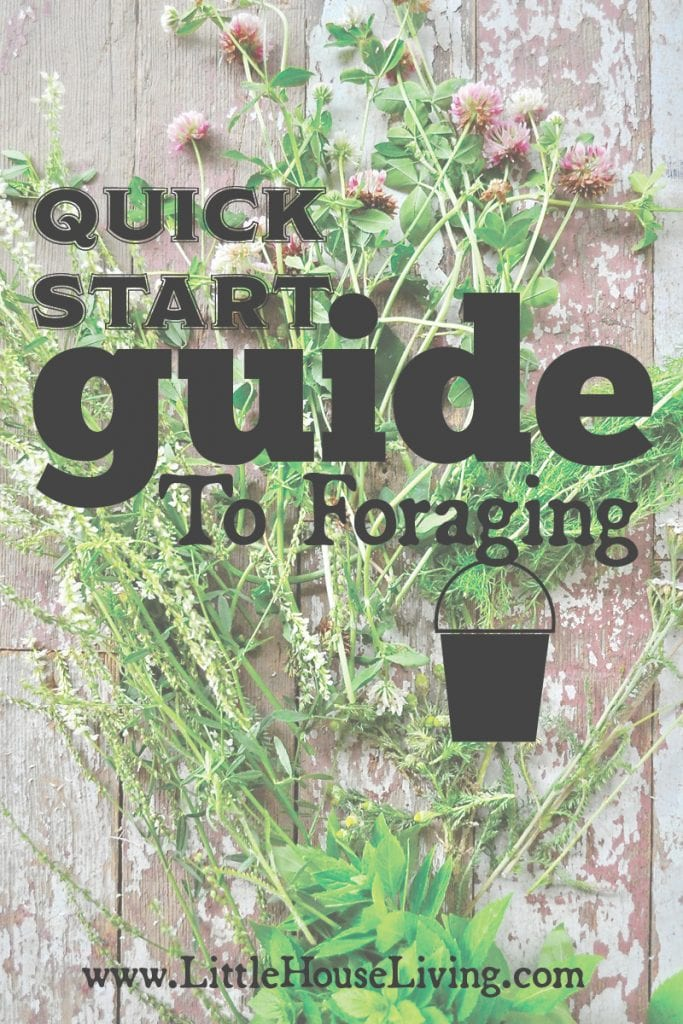 Quick Start Guide to Foraging