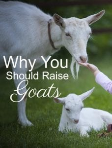 Why You Should Raise Goats