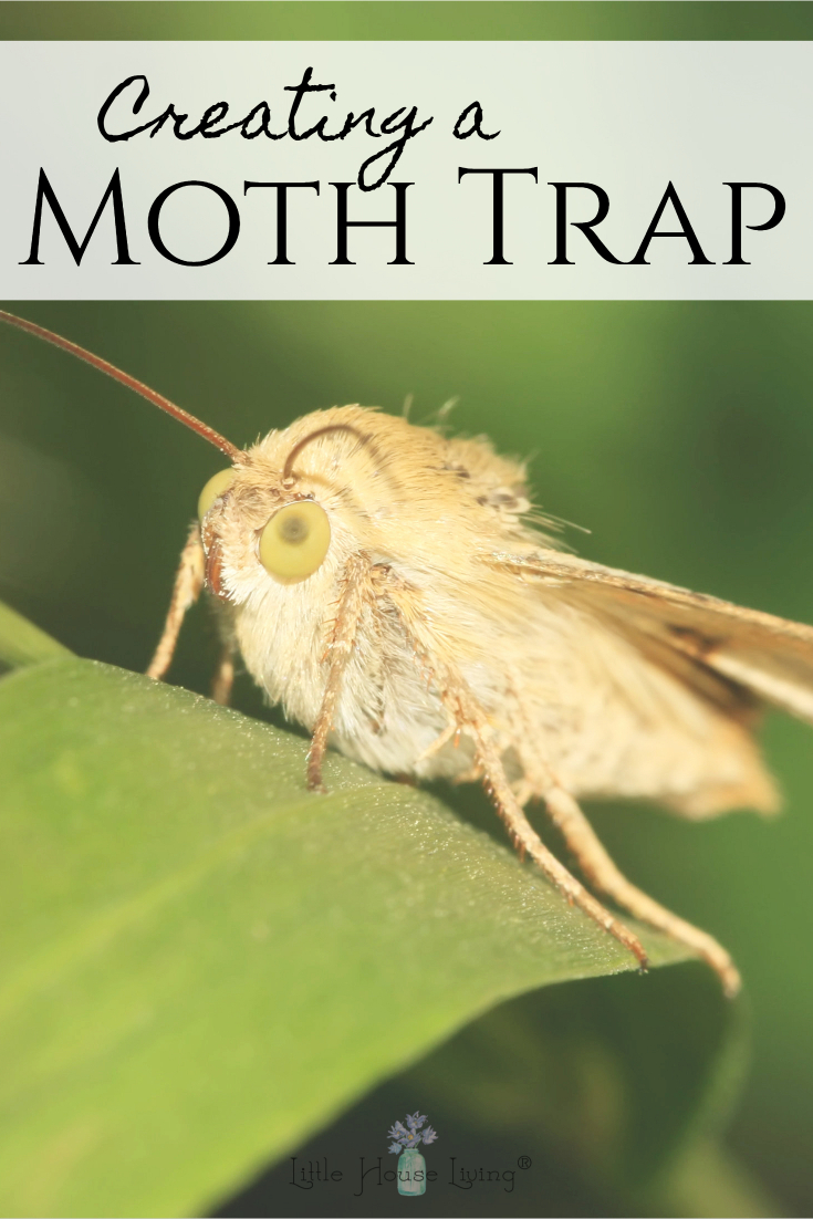 Have a moth problem? Here's a simple, no toxic chemical solution to creating a moth trap to keep the little creatures from taking over your home! #mothtrap #creatingamothtrap #diymothtrap #homemademothtrap