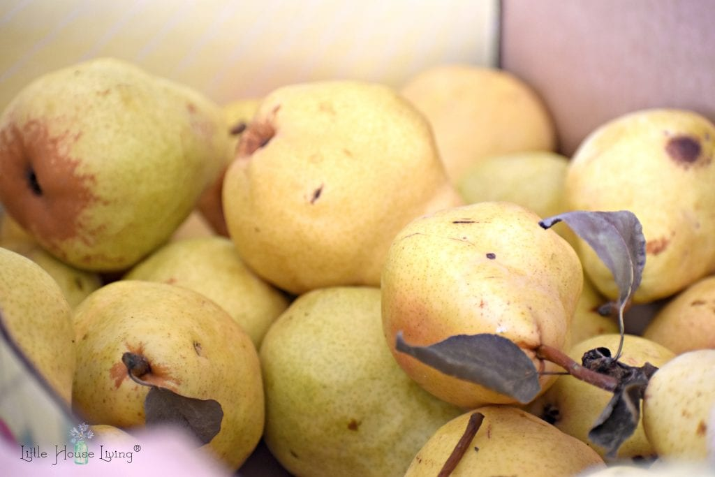 Pears to Dehydrate
