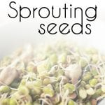 How to Begin Sprouting Seeds