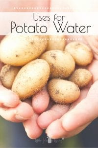 You can use potato water as a substitute thickener, add it to all sorts of dishes for extra flavor and even use it in the garden to add nutrients to your soil. Read on to learn about all the ways you can use potato water, and how to make it in the first place! #potatowater