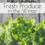 Save money and eat fresh and healthy year-round by learning how to grow fresh produce in the winter. This article has some simple tips to get you started. #wintergarden #howtogrowproduceinthewinter #freshproduceyearround #gardening #hydroponics #greenhouse #containergardening #indoorgarden #regrowvegetables #freshvegetablesyearround