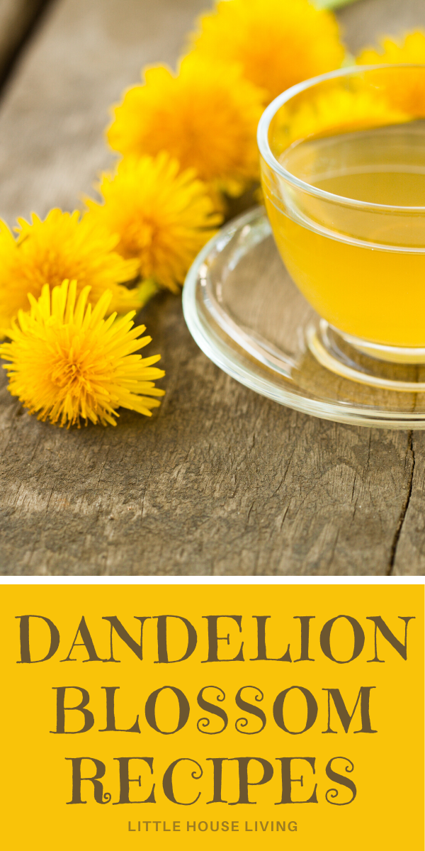 """If you've been outside lately, you've likely seen a field of yellow dandelion flowers. These """"weeds"""" are edible and delicious, learn how to harvest them and how to use them in your food! #dandelions #wildedibles #foraging #dandelionflowers #dandeliontea #dandelionrecipes"""
